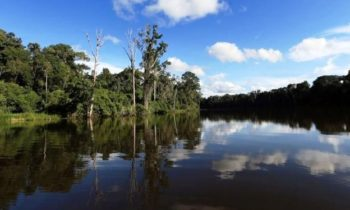 Norway and the UN pledge to protect the Amazon