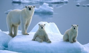 White paper on the future of Svalbard