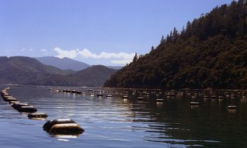 Aquaculture NZ pays for council delegation to visit Norway