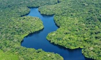 arial-view-of-amazon-rainforest_foto_neil-palmerciat_bredde