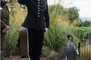 Penguin promoted to brigadier in Norwegian Army