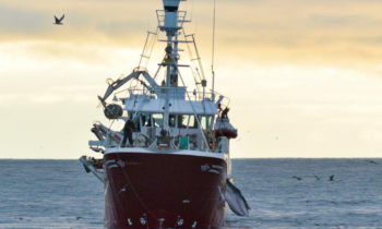 NGOs urge European Union to take lead in ending whaling in European waters