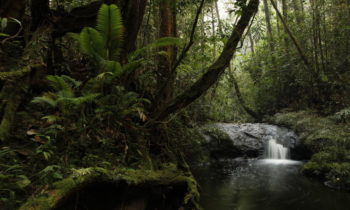 Norway to Support West Sumatra in Forest Conservation
