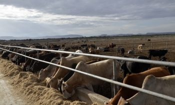 Beef exporter receives $7 million boost from Norfund