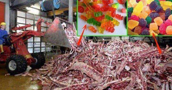 Hindus urge Norway Govt. to mandate listing of gelatin source on food, which many times is beef