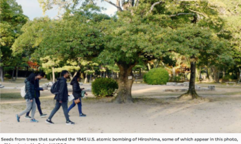 Norwegian princess to plant seeds from Hiroshima trees in Oslo ahead of Nobel ceremony