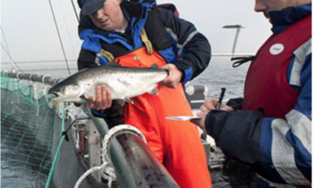 Norway Royal Salmon and Aker's proposal to grow more salmon in the Arctic receives green light