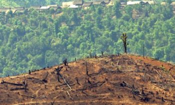Portugal accused of being European gateway for illegal Congo timber