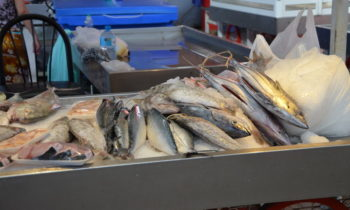 Norwegian govt calls on Pacific to help fight against fisheries crime
