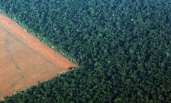 Germany, Norway and the United Kingdom call for more ambition on global forest protection