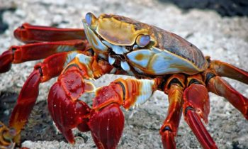'Crab war' between Norway & EU in the Arctic